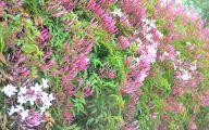 Pink Jasmine Flowers  38 Background