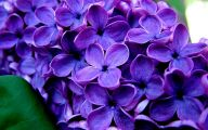 Purple Flowers For Bouquets  1 Background