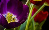 Purple Flowers Hd Wallpapers  11 Free Hd Wallpaper