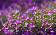 Purple Flowers Hd Wallpapers  15 Free Wallpaper
