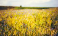 Purple Flowers Hd Wallpapers  16 Desktop Background