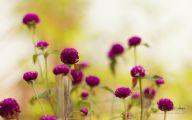 Purple Flowers Hd Wallpapers  18 Desktop Wallpaper