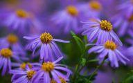 Purple Flowers Hd Wallpapers  21 Wide Wallpaper