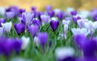 Purple Flowers Hd Wallpapers  5 Desktop Background