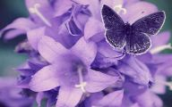 Purple Flowers Hd Wallpapers  8 High Resolution Wallpaper
