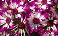 Purple Flowers Hd Wallpapers  9 Desktop Background