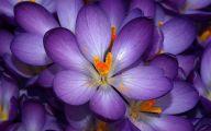 Purple Flowers Photo  2 Desktop Background