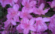 Purple Flowers Photo  3 Background