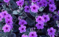 Purple Flowers Photo  4 Cool Wallpaper