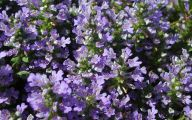 Purple Flowers Photo  5 High Resolution Wallpaper