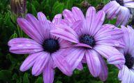 Purple Flowers Photo  6 Hd Wallpaper