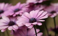 Purple Flowers Pics  1 Cool Hd Wallpaper