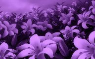 Purple Flowers Pics  3 Desktop Background
