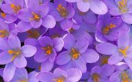 Purple Flowers Picture  12 High Resolution Wallpaper