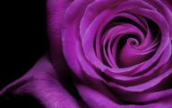 Purple Flowers Picture  4 Free Hd Wallpaper