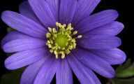 Purple Flowers Picture  5 Background Wallpaper