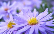 Purple Flowers Picture  9 Free Wallpaper