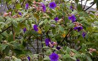 Purple Flowers Plants  1 Hd Wallpaper