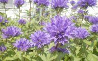 Purple Flowers Plants  10 High Resolution Wallpaper