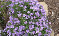 Purple Flowers Plants  2 Free Hd Wallpaper