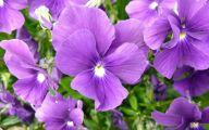 Purple Flowers Plants  6 Desktop Wallpaper
