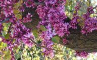 Purple Flowers Plants  7 Free Wallpaper