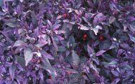 Purple Flowers Plants  8 Cool Hd Wallpaper