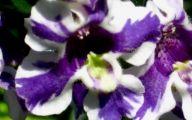 Purple Flowers Summer  14 Free Hd Wallpaper