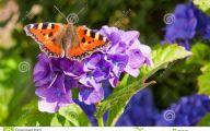Purple Flowers Summer  16 Cool Hd Wallpaper