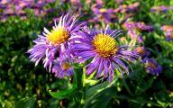 Purple Flowers Summer  2 Free Hd Wallpaper