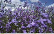Purple Flowers Summer  20 Background