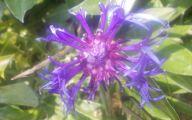 Purple Flowers Summer  23 Wide Wallpaper