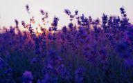 Purple Flowers Summer  3 Desktop Wallpaper