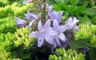Purple Flowers Summer  6 High Resolution Wallpaper