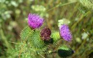 Purple Queen Flowers  16 Background