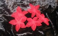Red Flowers 5 Petals  20 Cool Hd Wallpaper
