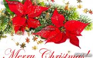Red Flowers For Christmas  9 Background Wallpaper