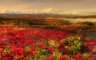 Red Flowers For Garden  10 Cool Wallpaper