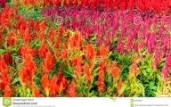 Red Flowers For Garden  18 Wide Wallpaper
