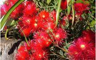 Red Flowers For Garden  25 High Resolution Wallpaper