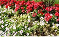 Red Flowers For Garden  29 Desktop Background