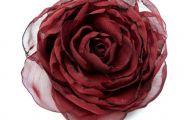 Red Flowers For Hair  27 Desktop Background
