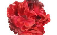 Red Flowers For Hair  6 Free Hd Wallpaper