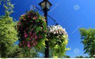 Red Flowers For Hanging Baskets  1 Widescreen Wallpaper