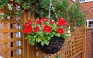 Red Flowers For Hanging Baskets  10 High Resolution Wallpaper