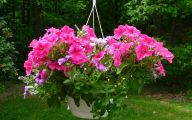 Red Flowers For Hanging Baskets  12 Cool Wallpaper