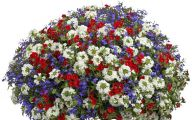 Red Flowers For Hanging Baskets  16 Free Wallpaper
