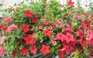 Red Flowers For Hanging Baskets  23 Cool Hd Wallpaper