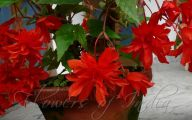 Red Flowers For Hanging Baskets  25 Widescreen Wallpaper