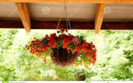Red Flowers For Hanging Baskets  26 Free Hd Wallpaper